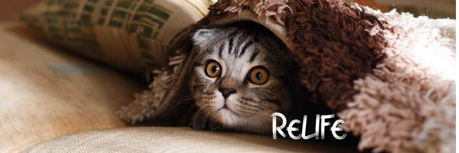 RELIFE地域猫サポート